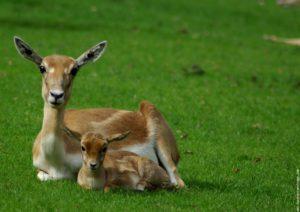 La Bihoree Maison d hotes antilope cerza