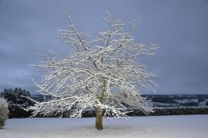 cerier sous la neige pf