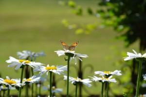 chambre dhotes Normandie Calvados Marguerites et Papillon PF