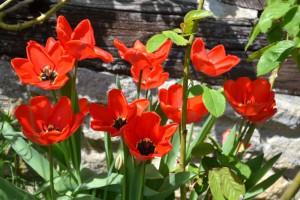 chambre dhotes Normandie Calvados jardin tulipes PF