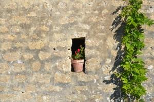 detail pot de fleurs