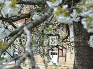 la bihoree manoir cerisier en fleur